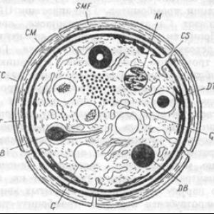 Тромбоциты функция