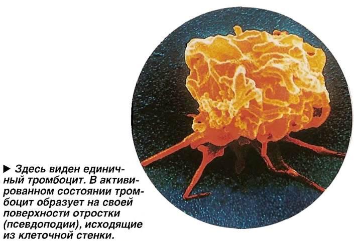 Размеры тромбоцитов